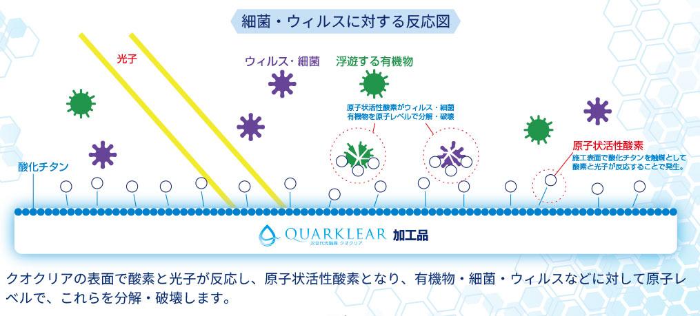 クオクリアの細菌・ウイルスに対する反応図